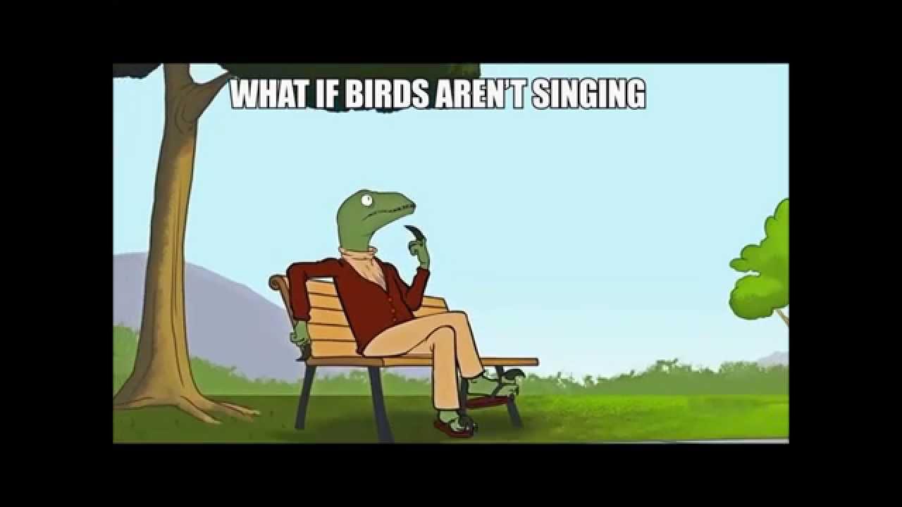 maxresdefault birds afraid of heights youtube