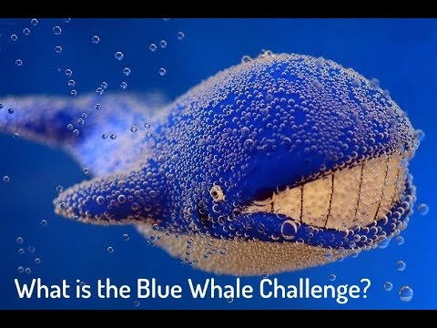 What is the Blue Whale Challenge? | BGR India