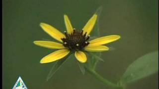 Flower Pollination