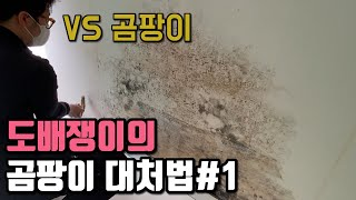 벽지곰팡이 대처법 1편 / 곰팡이벽지도배 / 단열재시공…