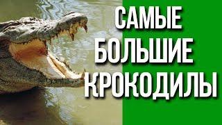 Самые большие крокодилы в мире / Интересные факты о животных