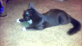 Oliver Loves Catnip Thumbnail