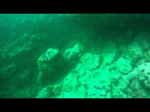 Las Marietas dive with Manta