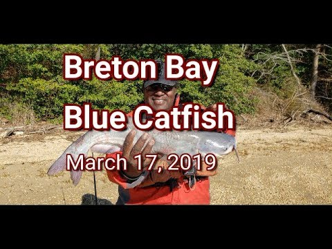 Breton Bay Blue Catfish 03-17-2019