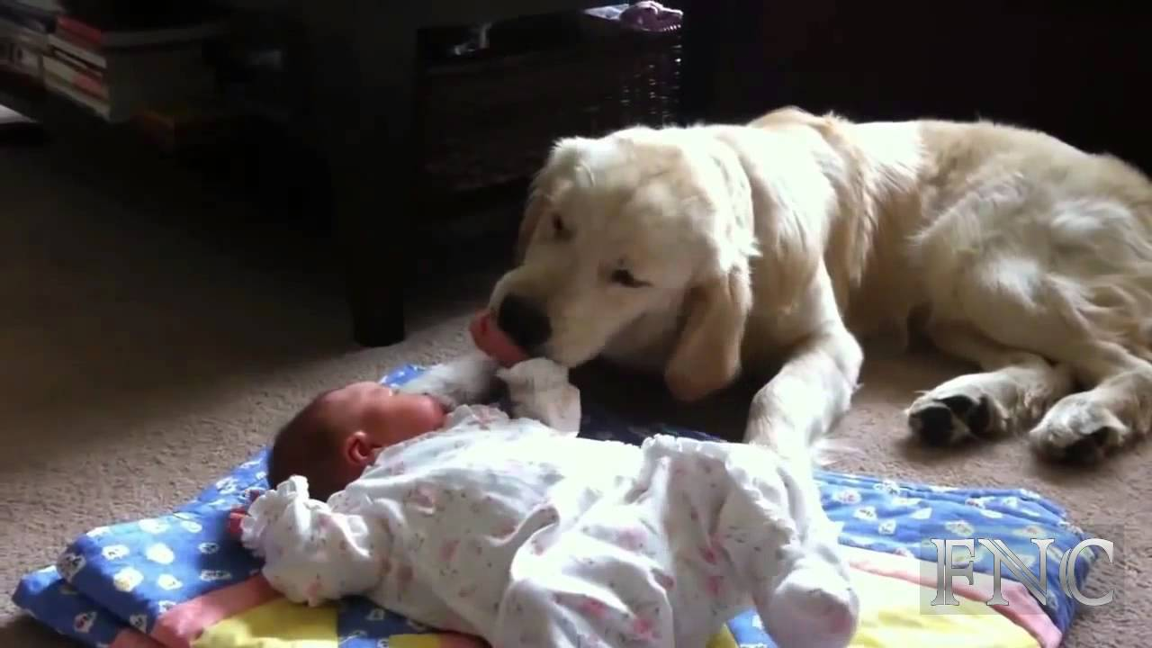 Dog Takes Care Of Baby Youtube