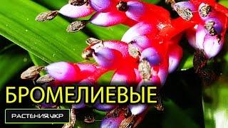 видео Ареал растений