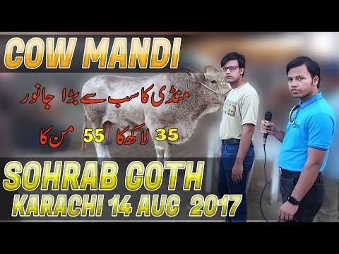 Cow Mandi Sohrab Goth Karachi 14 Aug 2017 In (Urdu/Hindi