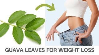 How To Use Guava Leaves For Weight Loss | Weight loss for women