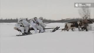 Учения по боевому использованию оленьих и собачьих упряжек