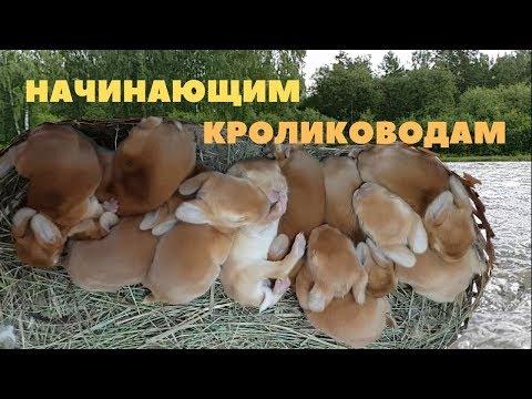 Размножение кроликов /Советы по разведению и содержанию