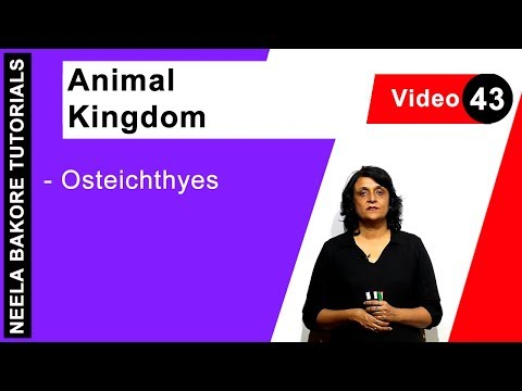 Biology For NEET & AIIMS | Animal Kingdom - Osteichthyes