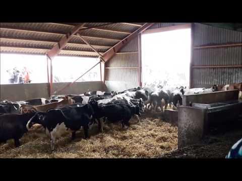Denmarks Dancing Cows - økodag 2017