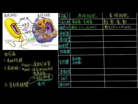 高一生物12觀念12真核細胞與原核細胞的比較