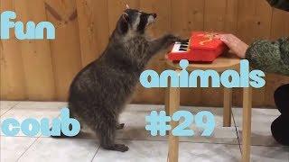 FUN coub animals #29 / видео приколы / coub 2019 / животные / смешные животные / приколы 2019 / cube