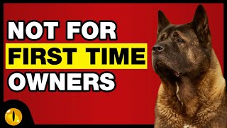 TOP 10 DOGS NOT FOR FIRST TIME OWNERS