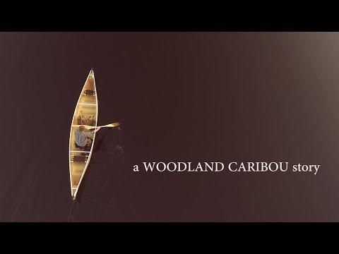 A Woodland Caribou Story [ Adventure Vlog #2 ]