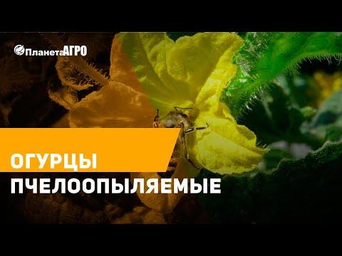 🎥 Обзор семян огурцов пчелоопыляемые, среднеранние 2019 🔴 Часть 20 🌿 Планета Агро