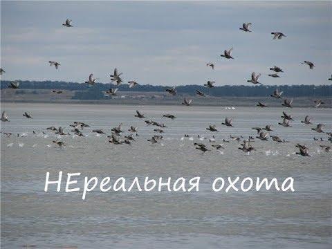 НЕРЕАЛЬНАЯ охота на утку  2019 / База - Приволье / Отличная охота /  Duck hunt 2019