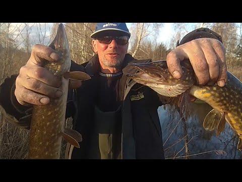 Щука на поплавок. Трудовая рыбалка в Беларуси.Ловля щуки на живца.
