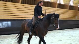 Equitation Dressage : Viriato et Céline démonstration de travail