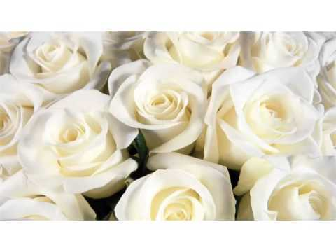 White rose flower images ideas collection rose is best gift for white rose flower images ideas collection rose is best gift for valentines day to your partner mightylinksfo