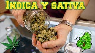 Diferencia entre una mala Marihuana y una buena marihuana!!!
