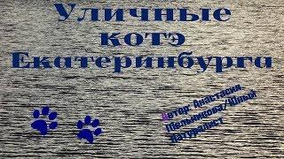 Уличные коты и кошки ЕКАТЕРИНБУРГА!