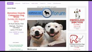 Staffordshire Bull Terrier Website Staffy Hub Staffyclub