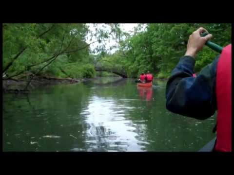 Bronx River Canoeing