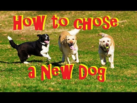 How to Pick a New Dog - Humane Society Rescue Shelter