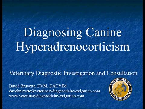 Diagnosing Canine Hyperadrenocorticism