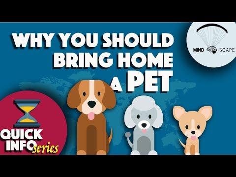 Benefits of having pets