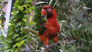 Шатаем попугая и тыкаем пальцами в кондора, получая за это кусь