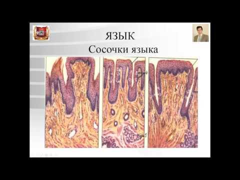 Заболевания слизистой полости рта