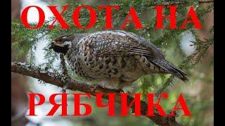 ОХОТА НА БОРОВУЮ ОХОТА НА РЯБЧИКА / HUNTING FOR UPLAND HUNTING FOR GROUSE