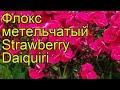 Поделки - Флокс метельчатый Клубничный Дайкири. Краткий обзор, описание phlox paniculata Strawberry Daiquiri