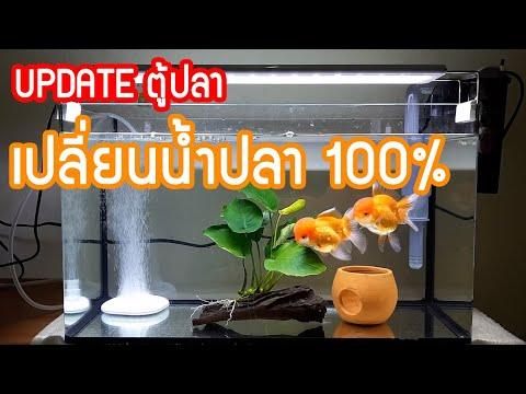ตู้ปลา EP. 3 | อัพเดท วันที่ 3 ล้างตู้ปลา 100% | Note Family