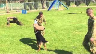 Raaf Dogs, Edinburgh Adelaide