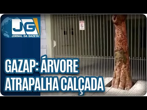 Árvore atrapalha calçada na ZL