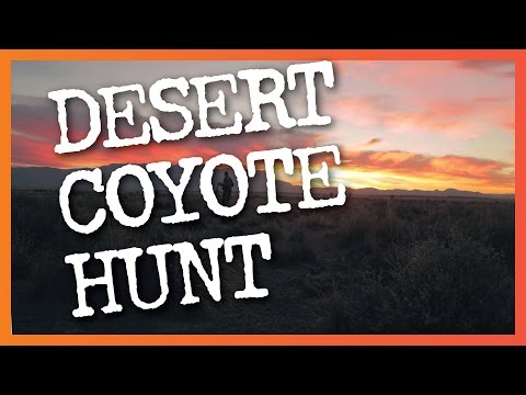 Desert Coyote Hunting Adventure