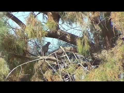 dove hunting 2019 Mp3
