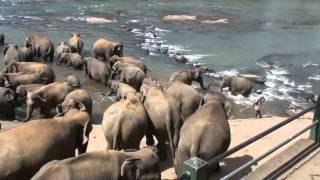 disabled elephant (LANDMINE!!!)