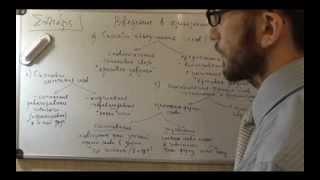 Введение в языкознание. Знакомство с синтаксисом