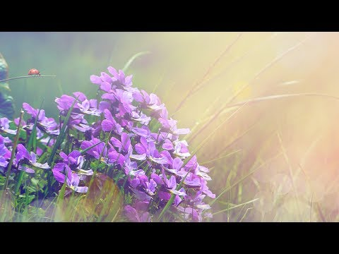 "Peaceful Music, Relaxing Music, Instrumental Music ""Sweet Summer Rose"" by Tim Janis"