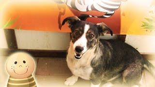 Śmieszne i Wesołe Zwierzęta- Pies Najlepszy Przyjaciel Człowieka- Baw się z nami