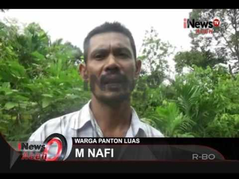 Komentar Warga Desa Panton Luas   iNews 18/04/2016