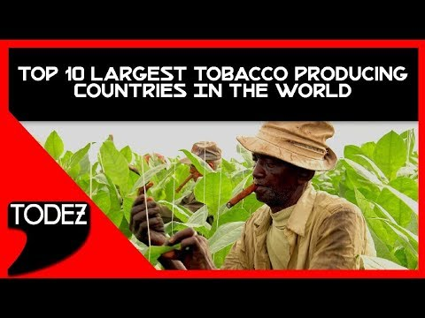 Top 10 Largest Tobacco Producing Countries In The World