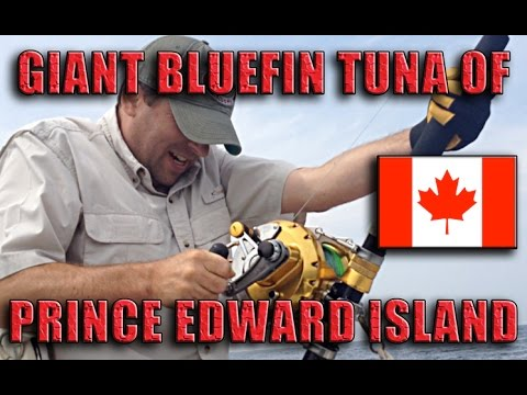 Giant Bluefin Tuna PEI Angling Adventure