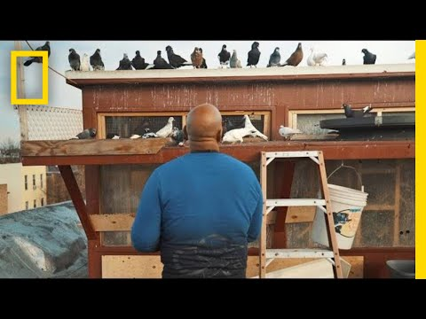 See How Pigeons Saved This Man From a Life on the Streets | Short Film Showcase