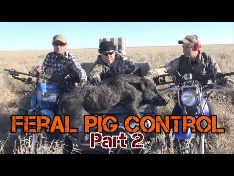 shooting wild hogs from helicopter with Ze2wnygtoni on Wild Hog Problem as well Shooting Feral Hogs From A Helicopter In Texas Video as well Pigman Ted Nugents Aerial Assault Hogs Video moreover Helicopter Hog Removal Enterprise Case Study as well R i.